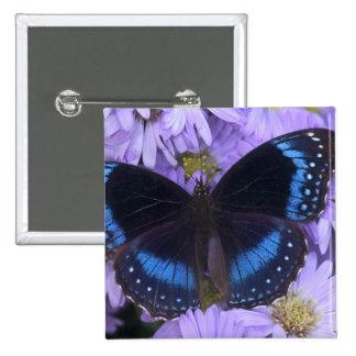 Sammamish Washington Photograph of Butterfly 20 Button