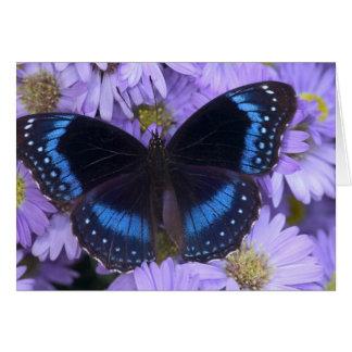 Sammamish Washington Photograph of Butterfly 20 Greeting Card