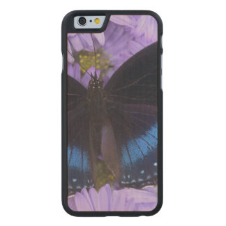 Sammamish Washington Photograph of Butterfly 20 Carved® Maple iPhone 6 Slim Case