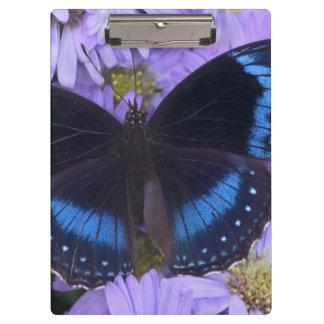 Sammamish Washington Photograph of Butterfly 20 Clipboards
