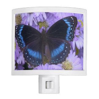 Sammamish Washington Photograph of Butterfly 20 Night Lite