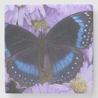 Sammamish Washington Photograph of Butterfly 20 Stone Beverage Coaster