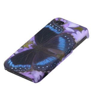 Sammamish Washington Photograph of Butterfly 20 iPhone 4/4S Case