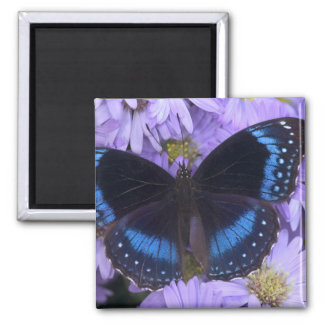 Sammamish Washington Photograph of Butterfly 20 Magnets