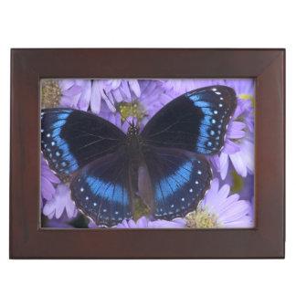 Sammamish Washington Photograph of Butterfly 20 Memory Boxes