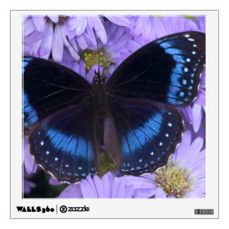 Sammamish Washington Photograph of Butterfly 20 Room Decals