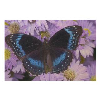 Sammamish Washington Photograph of Butterfly 20 Wood Prints