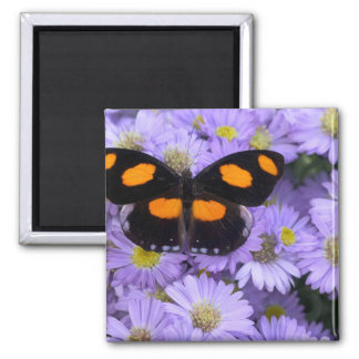 Sammamish Washington Photograph of Butterfly 21 Magnet