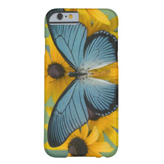 Sammamish Washington Photograph of Butterfly 22 Barely There iPhone 6 Case