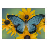 Sammamish Washington Photograph of Butterfly 22 Greeting Card