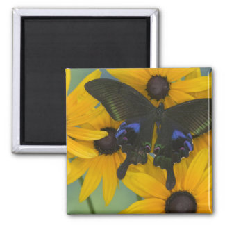 Sammamish Washington Photograph of Butterfly 23 Magnet