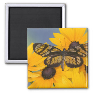 Sammamish Washington Photograph of Butterfly 24 Magnet