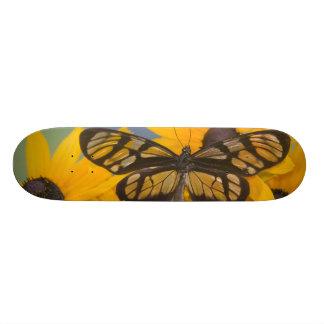 Sammamish Washington Photograph of Butterfly 24 Skateboard