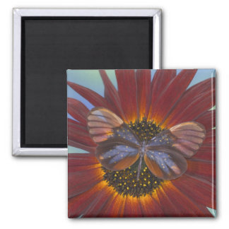 Sammamish Washington Photograph of Butterfly 25 Magnet
