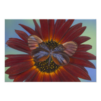 Sammamish Washington Photograph of Butterfly 25 Poster