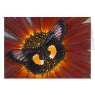 Sammamish Washington Photograph of Butterfly 26 Card