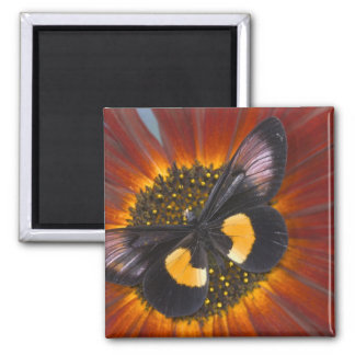 Sammamish Washington Photograph of Butterfly 26 Magnet