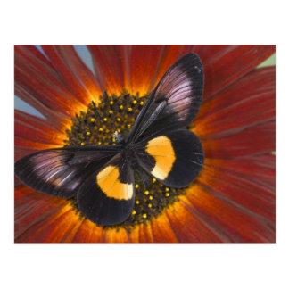 Sammamish Washington Photograph of Butterfly 26 Postcard