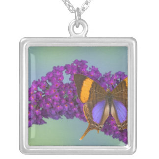 Sammamish Washington Photograph of Butterfly 27 Necklace