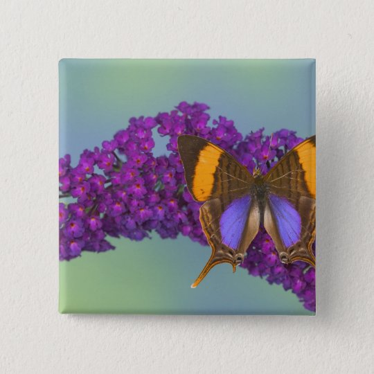 Sammamish Washington Photograph of Butterfly 27 Pinback Button