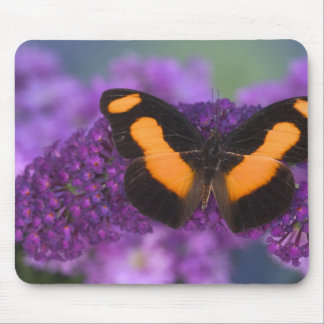 Sammamish Washington Photograph of Butterfly 28 Mouse Pad