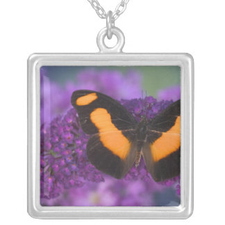 Sammamish Washington Photograph of Butterfly 28 Silver Plated Necklace