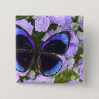 Sammamish Washington Photograph of Butterfly 2 Pinback Button