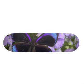 Sammamish Washington Photograph of Butterfly 2 Skateboard