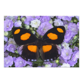 Sammamish Washington Photograph of Butterfly 3