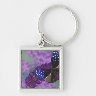 Sammamish Washington Photograph of Butterfly 30 Keychain