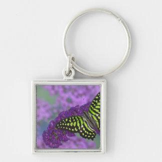 Sammamish Washington Photograph of Butterfly 31 Keychain