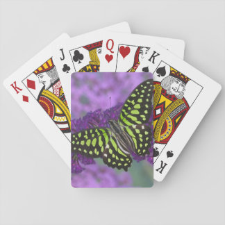 Sammamish Washington Photograph of Butterfly 31 Playing Cards