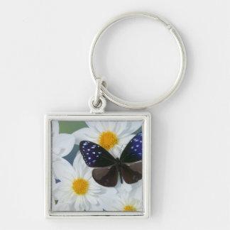 Sammamish Washington Photograph of Butterfly 33 Keychain
