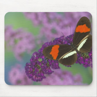 Sammamish Washington Photograph of Butterfly 34 Mouse Pad