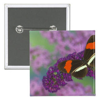 Sammamish Washington Photograph of Butterfly 34 Pinback Button