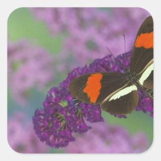 Sammamish Washington Photograph of Butterfly 34 Square Sticker