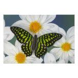 Sammamish Washington Photograph of Butterfly 35