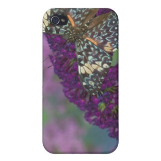 Sammamish Washington Photograph of Butterfly 35 iPhone 4 Cover