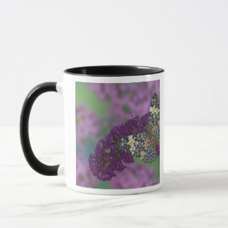 Sammamish Washington Photograph of Butterfly 35 Mug