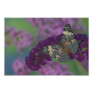 Sammamish Washington Photograph of Butterfly 35 Poster