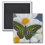 Sammamish Washington Photograph of Butterfly 36 2 Inch Square Magnet