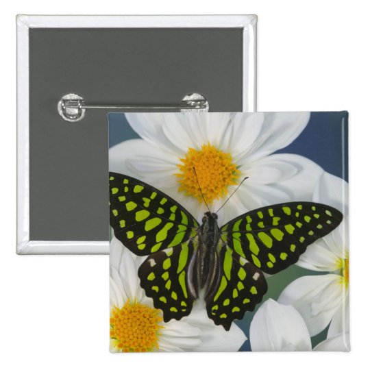 Sammamish Washington Photograph of Butterfly 36 Pinback Button