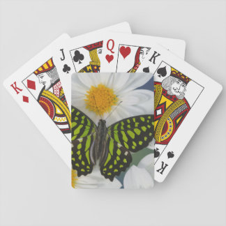 Sammamish Washington Photograph of Butterfly 36 Playing Cards