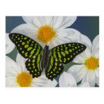 Sammamish Washington Photograph of Butterfly 36 Postcard