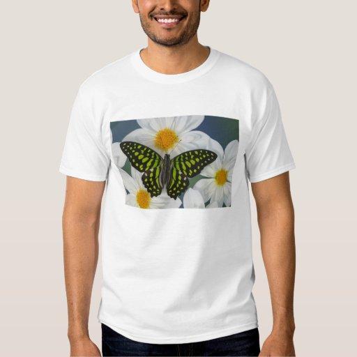 Sammamish Washington Photograph of Butterfly 36 T Shirt
