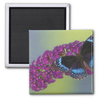Sammamish Washington Photograph of Butterfly 38 Magnet