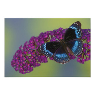 Sammamish Washington Photograph of Butterfly 38 Poster