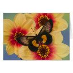 Sammamish Washington Photograph of Butterfly 39 Greeting Card