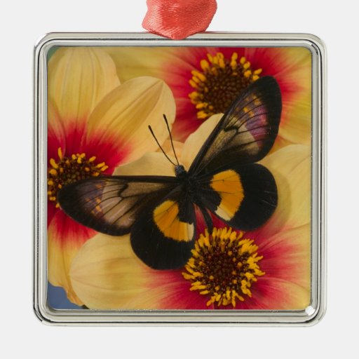 Sammamish Washington Photograph of Butterfly 39 Square Metal Christmas Ornament