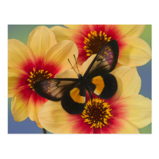 Sammamish Washington Photograph of Butterfly 39 Postcards